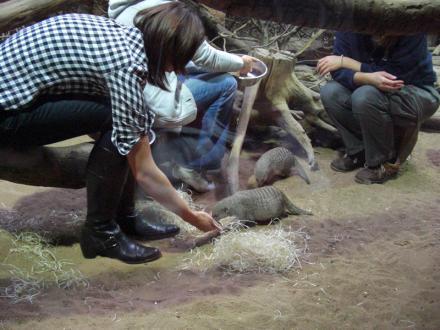 Erdmännchen Füttern im Tierpark Hellabrunn