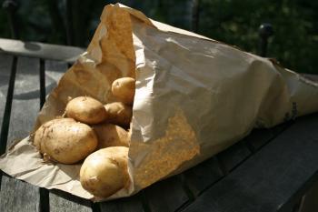 Heidekartoffel Sieglinde