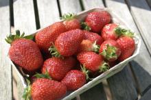 Erdbeeren vor der kulinarischen Behandlung