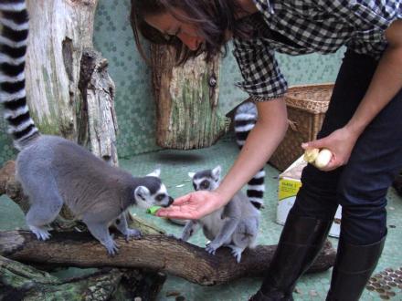 Kattas Füttern im Tierpark Hellabrunn
