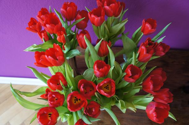 Frühlings Tulpen